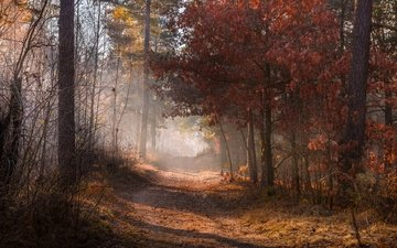 road, nature, forest, leaves, fog, autumn