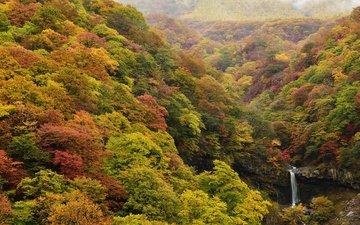 природа, лес, водопад, осень, япония, ирохадзака