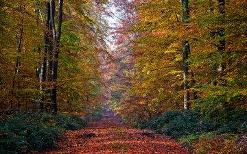 trees, nature, forest, leaves, autumn, trail