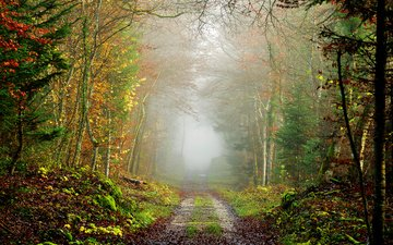 road, nature, tree, forest, landscape, fog, autumn