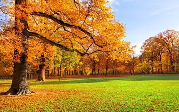 grass, nature, leaves, park, autumn, meadow