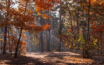 деревья, солнце, природа, лучи, парк, осень