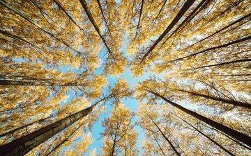 небо, деревья, природа, парк, ветки, осень