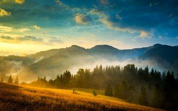 деревья, горы, природа, пейзаж, туман, украина, карпаты, деревmz