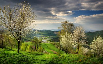 trees, river, nature, landscape, spring