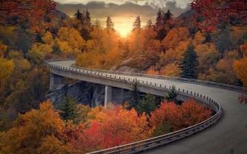 road, nature, landscape, the bushes, autumn