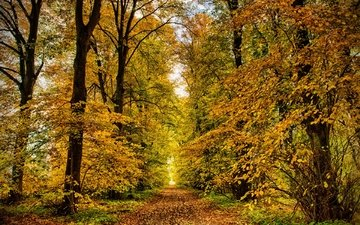 nature, park, autumn, alley