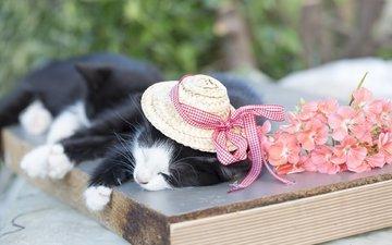 кот, кошка, сон, котенок, шляпа