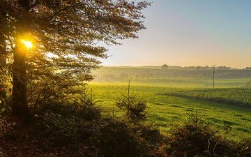 grass, nature, tree, landscape, morning, field, dawn, germany