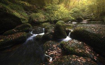 река, природа, лес, ручей, осень