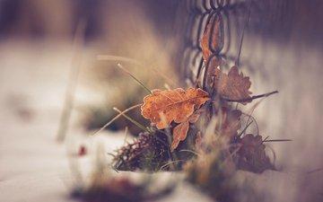 grass, macro, autumn, the fence, sheet, bokeh
