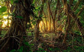 природа, лес, джунгли