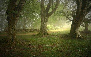 деревья, природа, лес, пейзаж, парк, туман, тропа