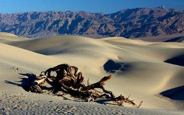 горы, пейзаж, песок, пустыня, коряга, дюны