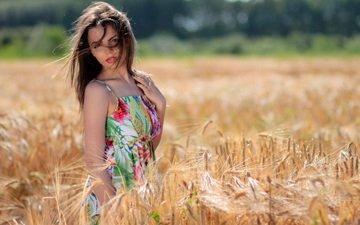 девушка, платье, поле, взгляд, колосья, волосы, zara