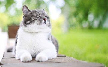 фон, кот, усы, кошка, сон, лапки