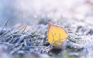 grass, nature, macro, frost, sheet