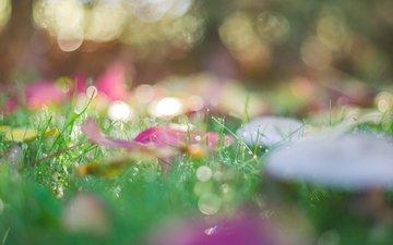 трава, листья, макро, осень, боке