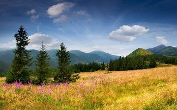 the sky, flowers, grass, trees, mountains, nature, tree, slope, spruce