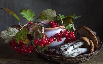 autumn, mushrooms, berries, still life, boletus, kalina, birch