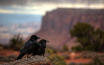 nature, sunset, animals, canyon, birds, crows
