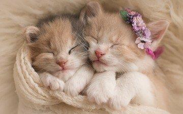 flowers, sleep, pair, cats, kittens, wreath, fur, scarf
