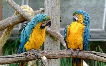 birds, pair, zoo, parrots