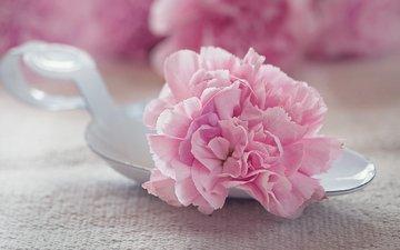 цветок, лепестки, розовый, тюльпан, махровый