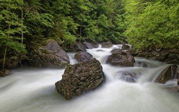 деревья, река, природа, камни, лес
