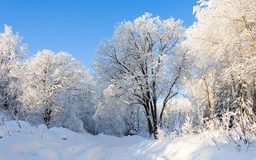 природа, лес, зима, парк, россия, урал