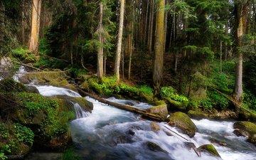 деревья, лес, ручей, водопад, горная речка