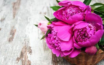 цветы, лепестки, корзинка, пионы