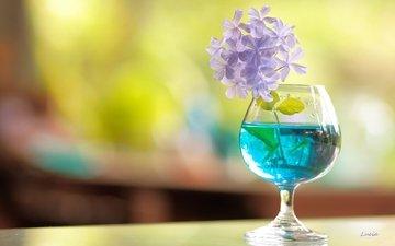 flower, glass, still life