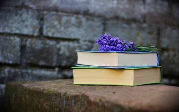 lavender, wall, books, bricks, reading, purple flowers
