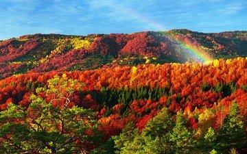 деревья, природа, лес, осень, радуга, карпаты