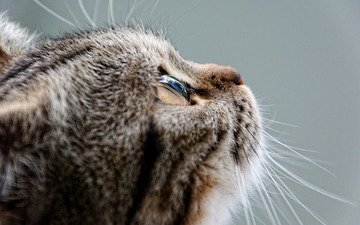 eyes, cat, muzzle, mustache, look, profile