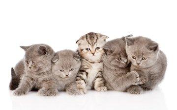 muzzle, mustache, look, kitty, kids, kittens