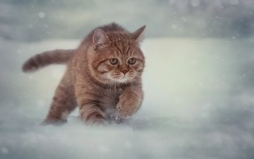 snow, winter, cat, muzzle, mustache, look, running