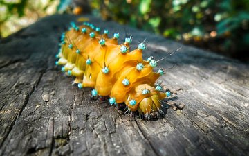 macro, insect, animals, caterpillar