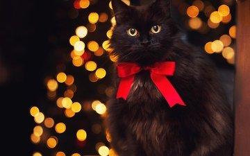 кот, мордочка, усы, кошка, взгляд, блики, бант, бантик, черный кот
