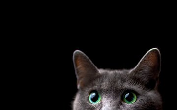 background, cat, muzzle, look, black background, ears