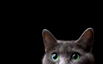 фон, кот, мордочка, кошка, взгляд, черный фон, ушки