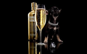 dog, puppy, glass, black background, bottle, champagne, alcohol, vodka, chihuahua, absolut