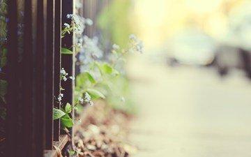 цветы, макро, забор, боке