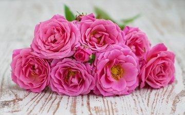 flowers, roses, petals, bouquet