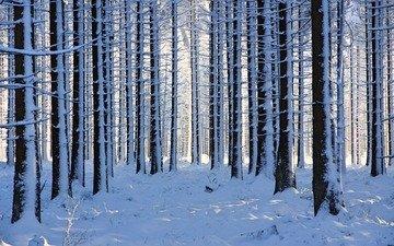 природа, лес, зима