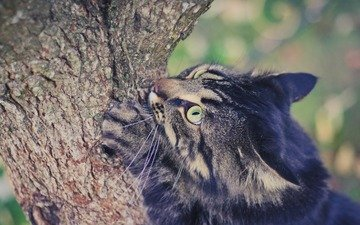 eyes, tree, background, cat, mustache, summer, look