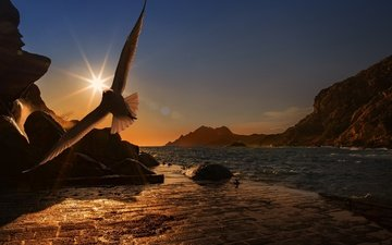 the evening, mountains, the sun, stones, sea, flight, seagull, promenade, bird