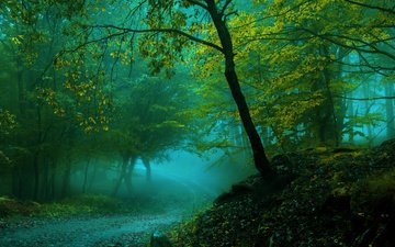 road, forest