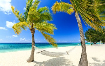 берег, море, песок, пляж, пальмы, гамак, тропики, карибы